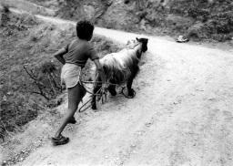 Enfant à la chèvre72
